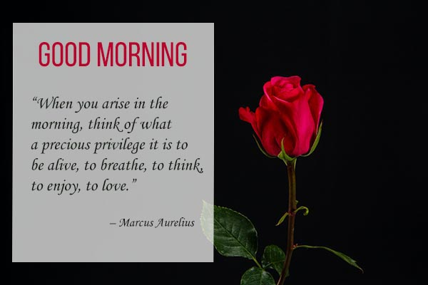 Good Morning Quotes and Image for love rose