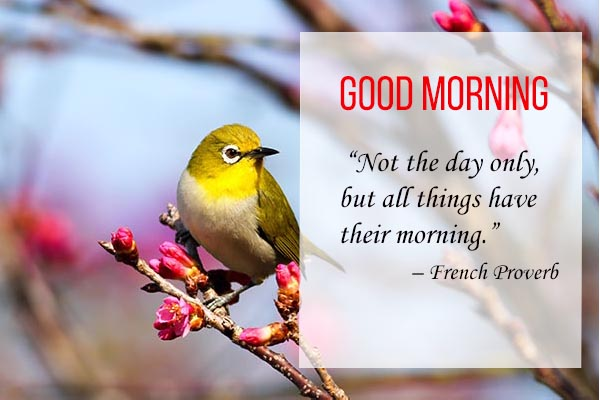 Good Morning Quotes and Images for a buetiful bird